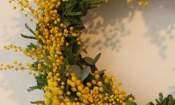 mimoza-eye