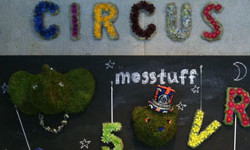 circus_eye